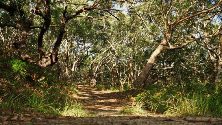 Tomaree Coastal Walk Track