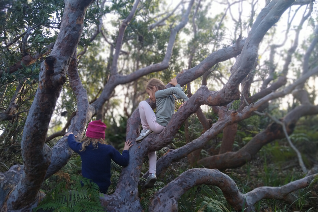 Two young girls climbing trees